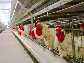 专注鸡肉调理品多年,营销方式亮点频频,这个企业厉害了!